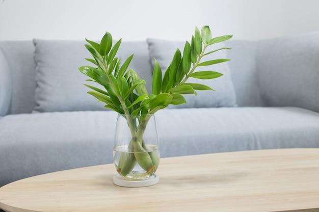 Verspreid zz plant of zamioculcas zamifolia met plant water in de woonkamer