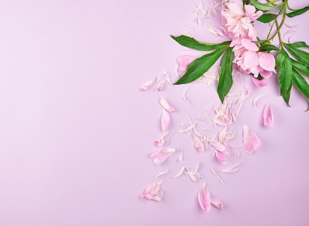 Verspreide bloemblaadjes van roze pioen met copyspace