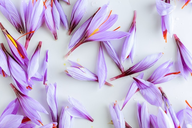 Verspreide bloemen van herfst paarse saffraan op een witte achtergrond.