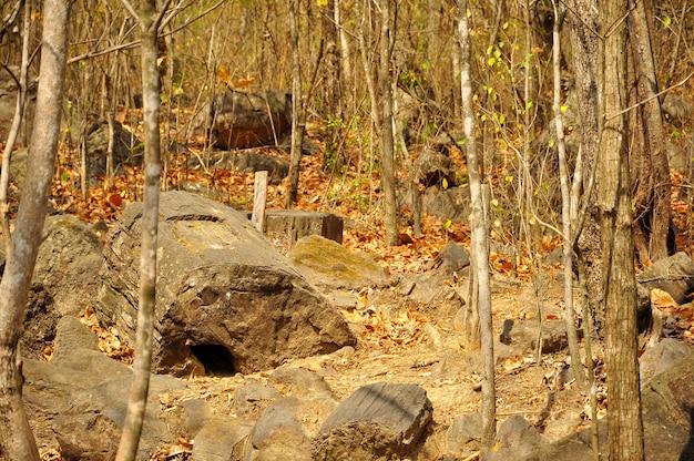 Versteend bos van puyango