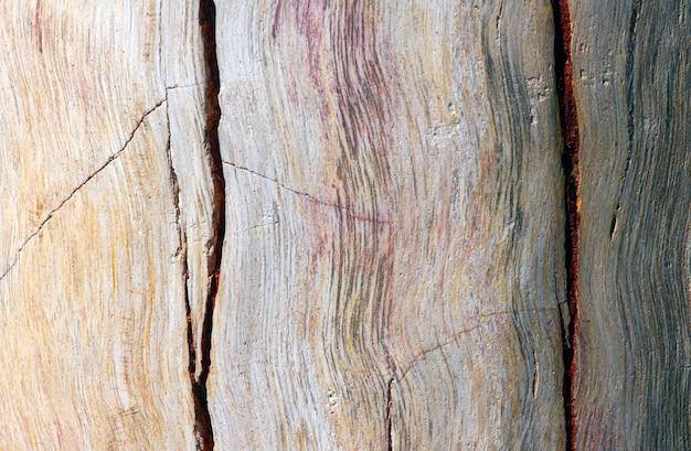 Versteend teakhout, fossiele textuur in ondiepe focus, natuurlijke achtergrond