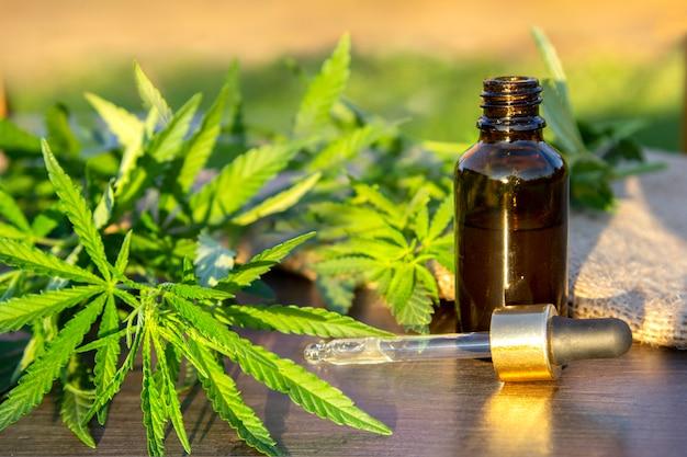 Vertakking cannabis met vijf vingers bladeren en pipet druppelaar met druppel in de buurt van glazen fles.