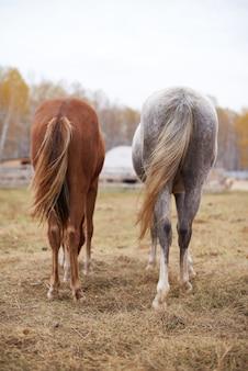 Verticaal achteraanzicht van kastanjebruine en grijze paarden die tijd doorbrengen met rusten op de weide