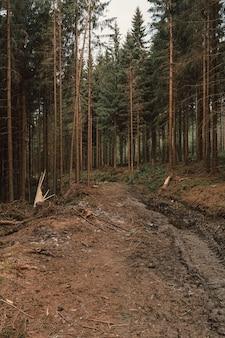 Verticaal beeld van dennen in het bos