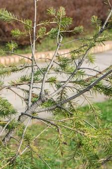 Verticaal beeld van sparrenbladeren en takken in een park