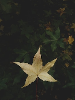 Verticaal close-upschot van een geel de herfstblad in een natuurlijke omgeving
