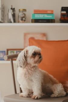 Verticaal close-upschot van een leuke witte pekapoo-hond