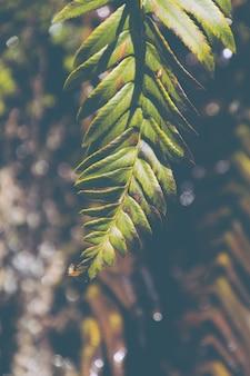 Verticaal close-upschot van een mooie bladtak van een boom