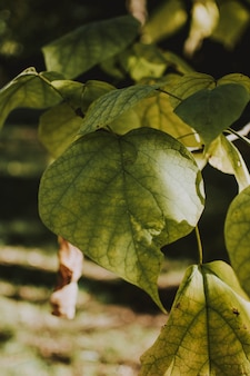 Verticaal close-upschot van groene bladeren op een zonnige dag met vage natuurlijke achtergrond