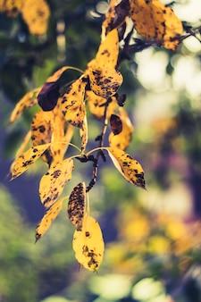 Verticaal close-upschot van mooie gouden bladeren met zwarte vlekken op hen in een bos