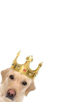 Verticaal, gezicht van een hond in een kroon.