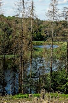 Verticaal schilderachtig uitzicht hoewel een deel van het bos in slechte staat verkeert