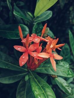 Verticaal schot o rode bloem met groene bladeren