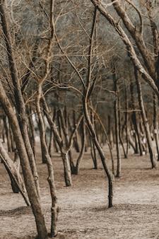 Verticaal schot van bladerloze bomen in een park in de herfst