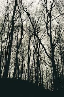 Verticaal schot van bladerloze boomsilhouetten in een bos overdag