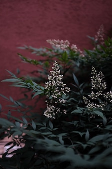 Verticaal schot van bloeiende witte bloemen in het groen