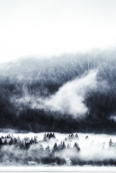 Verticaal schot van bomen dichtbij een beboste berg in een mist