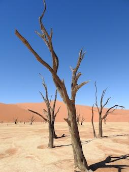 Verticaal schot van bomen in de woestijn in deadvlei namibië onder een blauwe hemel