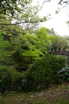 Verticaal schot van bomen met een oude brug onder een bewolkte hemel