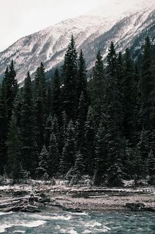 Verticaal schot van de groene pijnbomen dichtbij de rivier onder de besneeuwde bergen