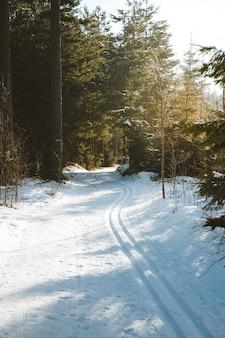 Verticaal schot van de hoge bomen op de met sneeuw bedekte grond die onder het zonlicht wordt gevangen