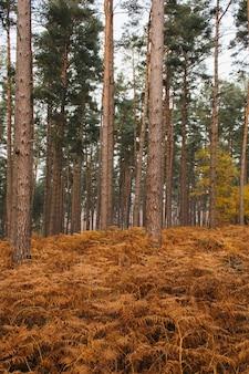Verticaal schot van de hoge bomen van een bos