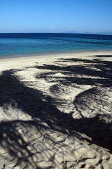 Verticaal schot van de weerspiegeling van palmen op een zandige kust
