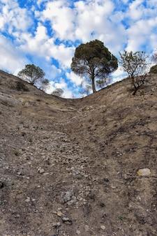Verticaal schot van dikke bomen bovenop een heuvel onder een mooie bewolkte hemel