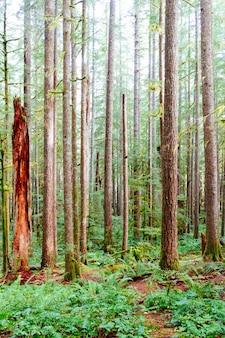 Verticaal schot van dunne boomboomstammen die door groen gras in een bos worden omringd