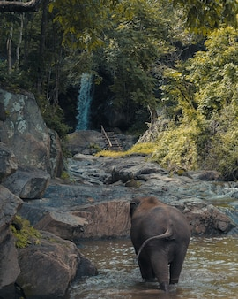 Verticaal schot van een babyolifant die in een vijver met groene bomen in de verte loopt