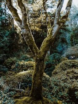 Verticaal schot van een bemoste boom die door installaties in een bos wordt omringd