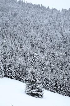 Verticaal schot van een besneeuwd alpien bos in de franse alpen tijdens de winter