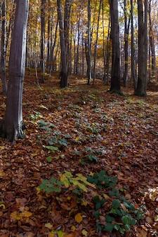Verticaal schot van een bos met bladeren ter plaatse gevallen op berg medvednica in de herfst