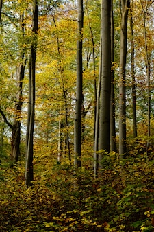 Verticaal schot van een bos met geel en groen doorbladerde bomen