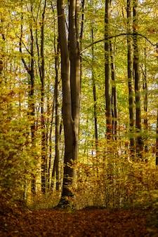 Verticaal schot van een bos met groen en geel doorbladerde bomen in duitsland