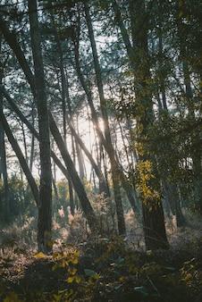 Verticaal schot van een bos met groene bomen