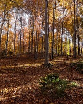 Verticaal schot van een bos op berg medvednica in zagreb, kroatië met gevallen bladeren in de herfst