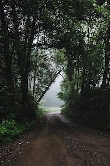 Verticaal schot van een bosweg tijdens een mistig weer