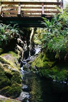 Verticaal schot van een brug over een waterval die in de rivier in het midden van een bos stroomt