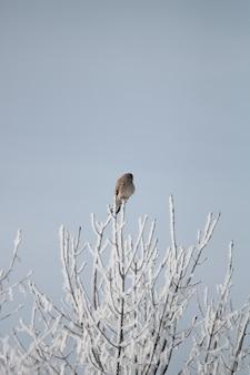 Verticaal schot van een bruine vogel die op het puntje van de tak rust
