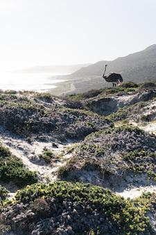 Verticaal schot van een eenzame struisvogel die zich in de heuvels op een mistige dag bevindt