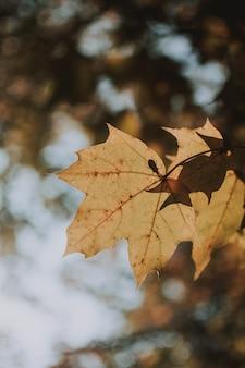 Verticaal schot van een geel blad op een zonnige dag met vage natuurlijke achtergrond