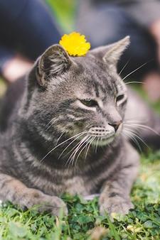 Verticaal schot van een grijze kat die op het gras ligt met een gele bloem op zijn kop
