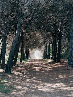 Verticaal schot van een grintweg die door de mooie bomen in een bos gaat