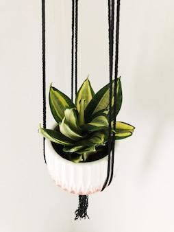 Verticaal schot van een groen-doorbladerde installatie in een witte hangende pot