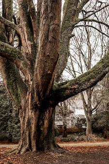 Verticaal schot van een grote oude boom met een witte hemel