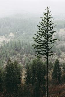 Verticaal schot van een hoge boom in het bos