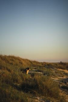 Verticaal schot van een hond die in het gras aan de kust rust