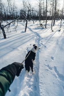 Verticaal schot van een hond die met een leiband in de sneeuw loopt
