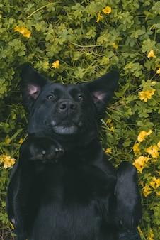 Verticaal schot van een hond die op zijn rug op een grasrijk gebied legt